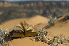 Paginaciones que soplan en dunas de arena rosadas Imagenes de archivo