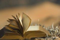 Paginaciones que soplan en dunas de arena rosadas Imagen de archivo libre de regalías