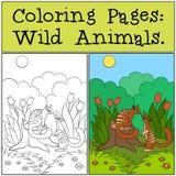 Pagine di coloritura: Animali selvatici Piccolo numbat sveglio sul ceppo illustrazione di stock