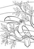 Pagine di coloritura uccelli Piccolo tucano sveglio Fotografia Stock Libera da Diritti