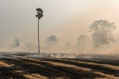 Paglia bruciante del riso Fotografia Stock Libera da Diritti