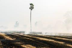Paglia bruciante del riso Immagini Stock Libere da Diritti