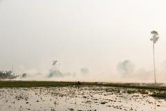 Paglia bruciante del riso Fotografia Stock
