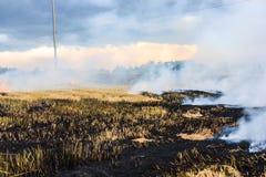 Paglia bruciante nella piantagione del riso. Immagine Stock
