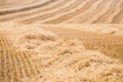 Paglia - campo dopo il raccolto Fotografie Stock Libere da Diritti