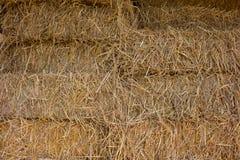 Paglia compressa dal fondo del riso nell'agricoltura in Tailandia Fotografia Stock