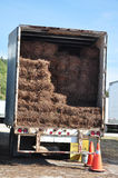 Paglia del pino in camion Fotografie Stock