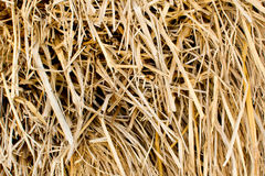 Paglia del riso per fondo Fotografie Stock