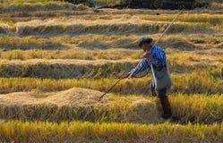 Paglia dell'ustione degli agricoltori nel campo Immagini Stock