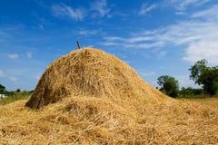 Paglia di riso Immagini Stock Libere da Diritti