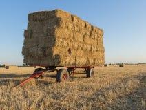 Paglia su un carretto sul campo di grano con il tramonto Immagini Stock
