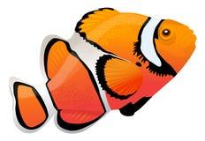 Pagliaccio Fish illustrazione vettoriale