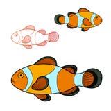 Pagliaccio Fish Fotografie Stock