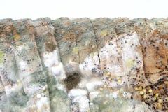Pagnotta di pane marrone ammuffito Fotografie Stock