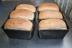 Pagnotte di pane fresche nella forma di pane di cottura Immagine Stock Libera da Diritti