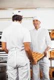 Pagnotte di trasporto del pane del panettiere felice in vassoio Immagine Stock Libera da Diritti