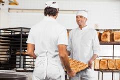 Pagnotte di trasporto del pane del panettiere sorridente in vassoio Fotografia Stock