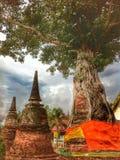 Pagod i träd Arkivfoton