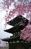 Pagoda. With Cherry blossom (sakura) in Nara, Japan Royalty Free Stock Photos