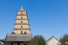 гигантский pagoda гусыни одичалый Стоковое Фото