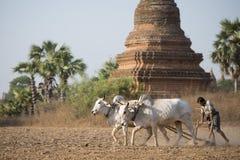 PAGODA AGRACULTURE DEL TEMPIO DELL'ASIA MYANMAR BAGAN Fotografia Stock