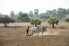 PAGODA AGRACULTURE DEL TEMPIO DELL'ASIA MYANMAR BAGAN Immagini Stock Libere da Diritti