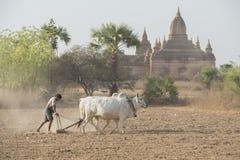 PAGODA AGRACULTURE DEL TEMPIO DELL'ASIA MYANMAR BAGAN Fotografia Stock Libera da Diritti