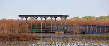 Pergola along a boardwalk through a marsh in autumn Stock Images