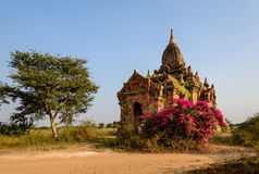 Pagoda in Bagan. Ancient pagoda surrounded by flowers, Bagan, Myanmar Stock Photos