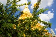 A pagoda behind the tree. Royalty Free Stock Photo