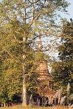 Pagoda behind a tree Stock Photos