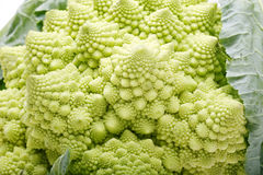 Pagoda cauliflower. Close-up of fresh pagoda cauliflower Stock Photography