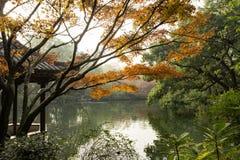 Pagoda cinese e lago di autunno Fotografia Stock Libera da Diritti