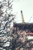 Pagoda con il fiore di ciliegia Fotografie Stock