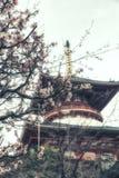 Pagoda con il fiore di ciliegia Immagine Stock Libera da Diritti
