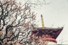 Pagoda con il fiore di ciliegia Fotografia Stock