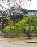 Pagoda coreana con l'albero verde e sakura di fioritura Immagini Stock