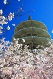 Pagoda da paz de Japão & flor de cereja Center Foto de Stock Royalty Free