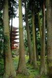 Pagoda dans le jardin de thé japonais images libres de droits