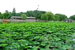Pagoda del blanco de jardín del verde de la flor de Lotus Imágenes de archivo libres de regalías