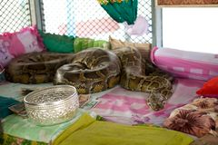 Pagoda del serpente fotografia stock libera da diritti