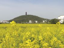 Pagoda on Hill Beyond Yellow Flowers. A pagoda stands atop a hill beyond a field of beautiful yellow rapeseed flowers stock photos