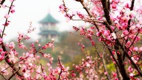 Pagoda i plommonträdgården Arkivbilder