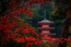 A pagoda inside Gifu park with red maple leaves foreground, Gifu, Japan. View of a pagoda inside Gifu park with red maple leaves foreground, Gifu, Japan royalty free stock photography