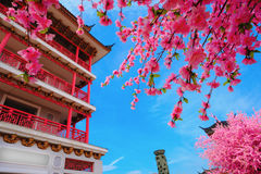 Pagoda japan style and Sakura flowers with blue sky background Stock Photography