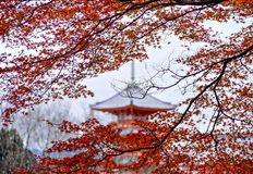 Pagoda and Maple Leaves  Stock Photos