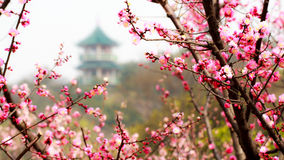 Pagoda nel giardino della prugna immagini stock