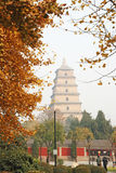 Pagoda sauvage géante d'oie en automne Photos stock