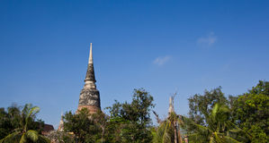 The Pagoda and treetop Royalty Free Stock Images