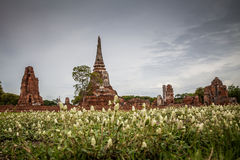 Pagoda w Ayutthaya, Tajlandia Obrazy Stock